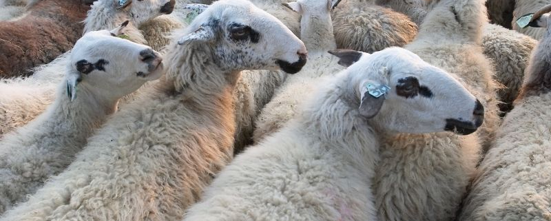 Herd Bias